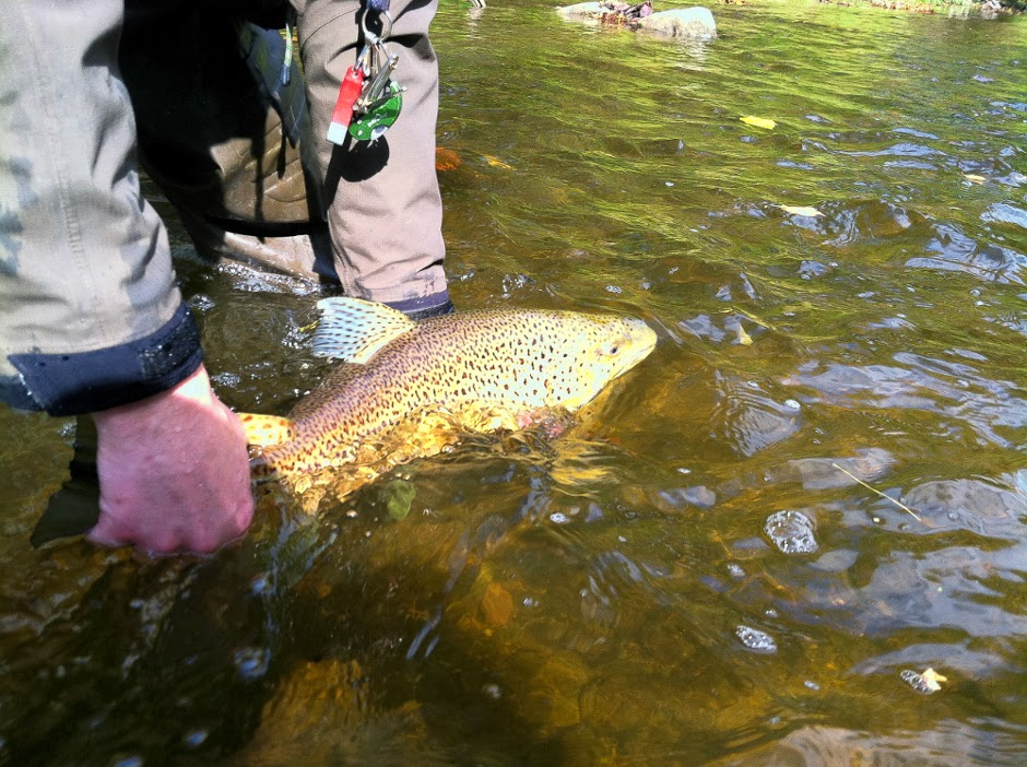 Illinois wisconsin fishing fall fly fishing in review for Trout fishing illinois
