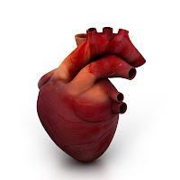 A Real Human Heart