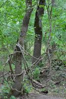 calatorie delta sulina c.a.rosetti cardon padurea letea periprava