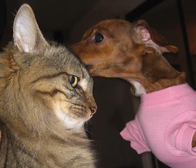 Cena da série Amigos pra Cachorro - Divulgação