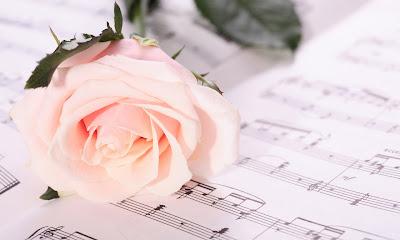 Rosa perfumada y autentica como las notas de una canción
