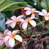 Istilah Morfologi tumbuhan