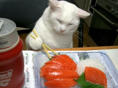 CAT AND SUSHI