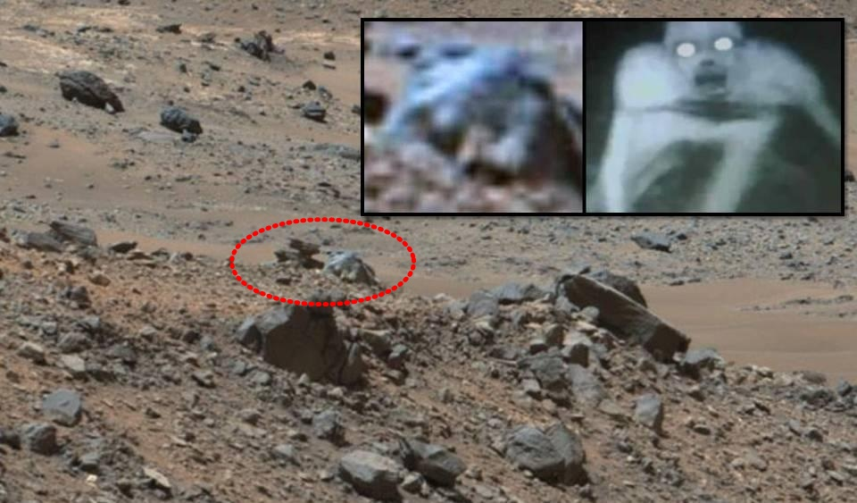 mars rover finds animal - photo #20