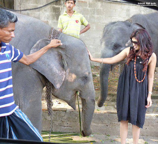 Anarkali Akarsha with elephant