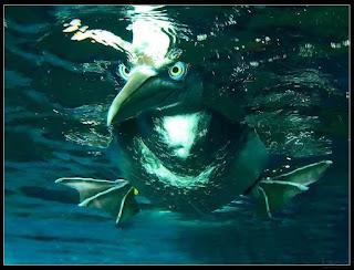 un pato mirando con ojos grandes debajo del agua