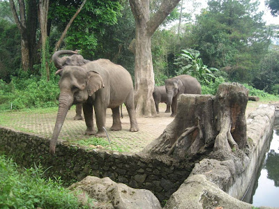 Taman Safari Indonesia di Cisarua - exnim.com
