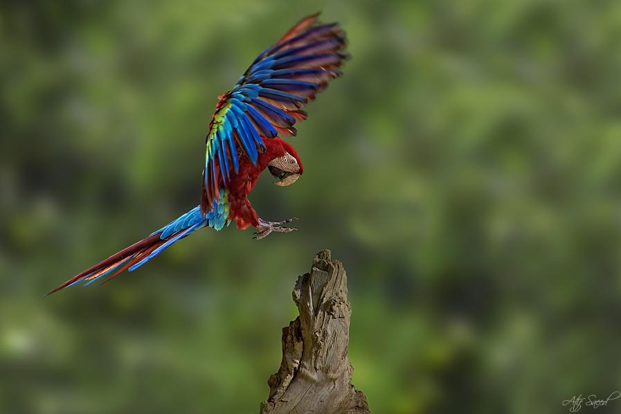 Parrots Lovers Macaws Photo Gallery