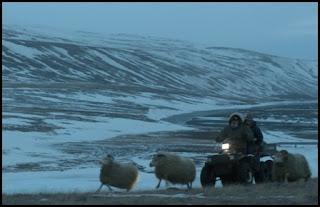 Rams (El valle de los carneros) (Grímur Hákonarson, 2015)
