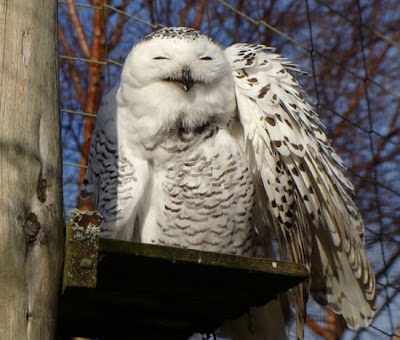 cool pictures of Owl