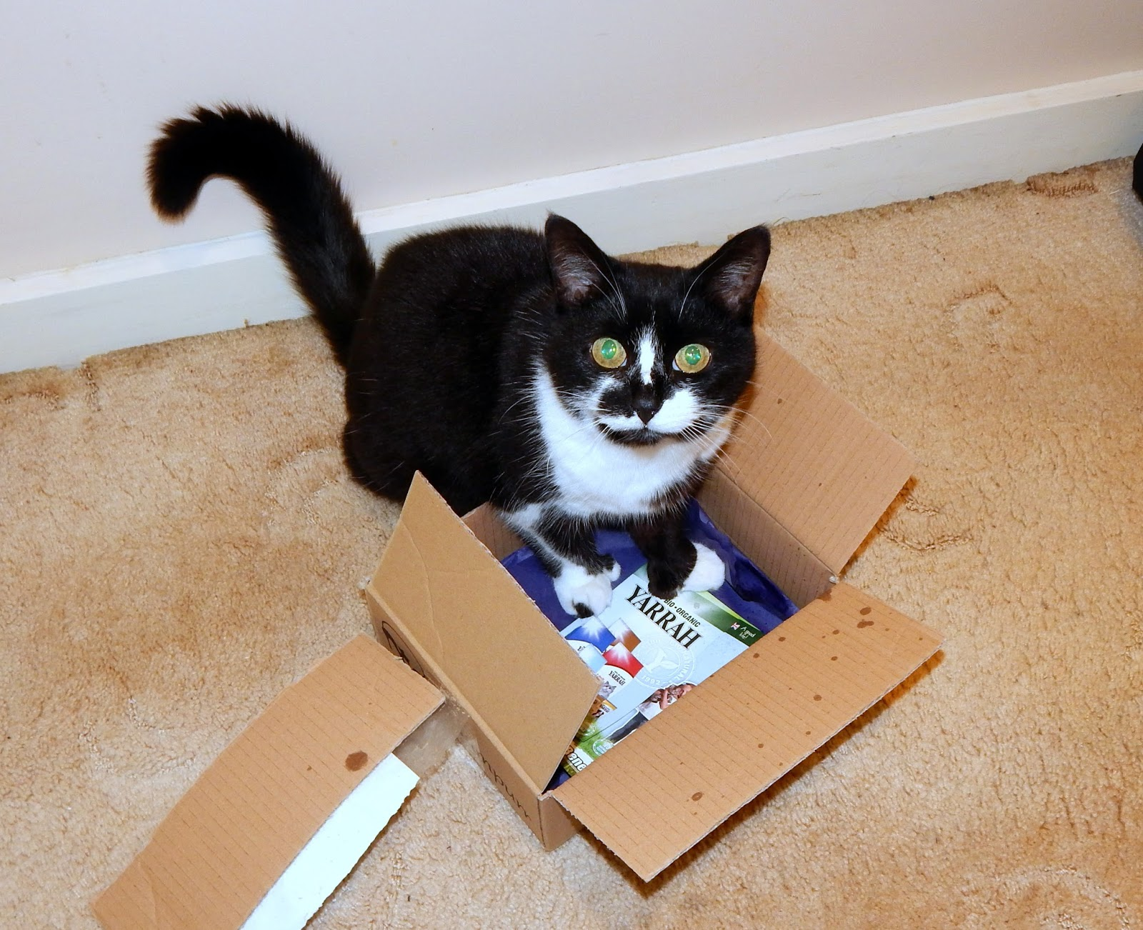 Cat Hampurr - The Subscription Box for you Cat!