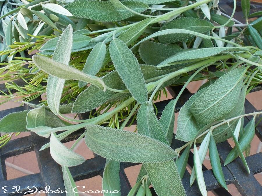 el jabon casero plantas aromaticas
