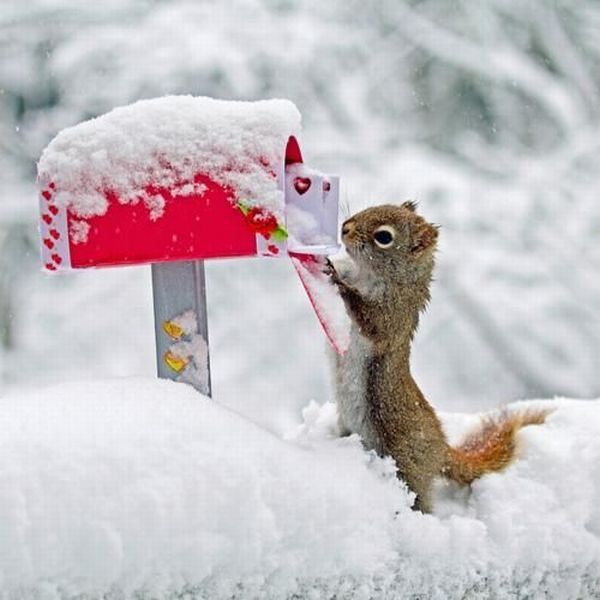 Funny Animals Wallpapers   Funny Animals Pictures Seen On www.coolpicturegallery.us