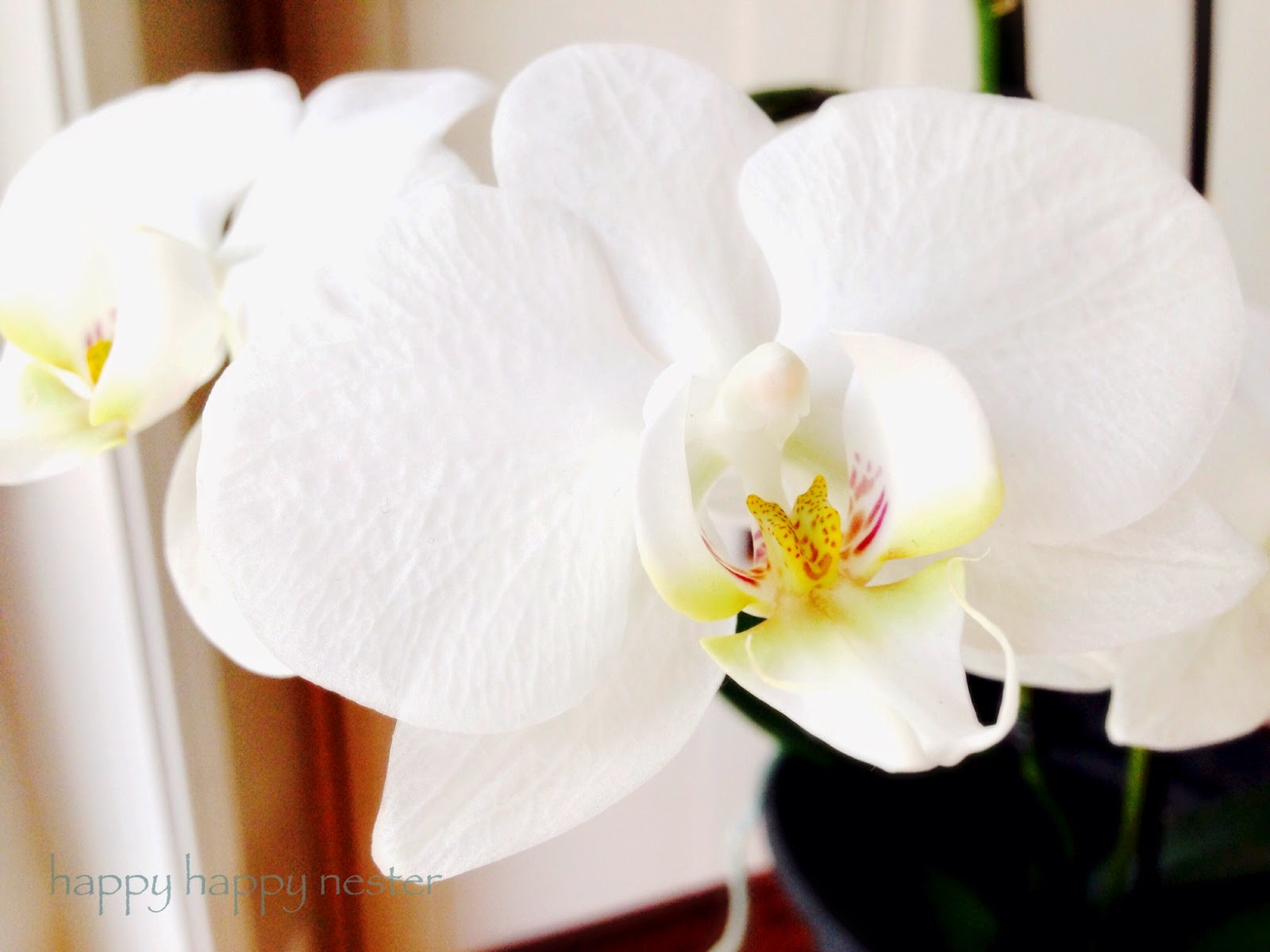 Happy Happy Nester How To Care For Phalaenopsis Orchids