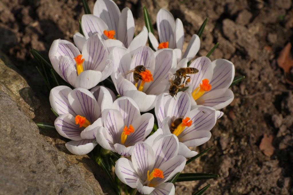 Insekt an Becherblume