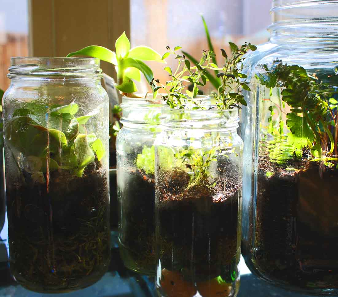 How To Make Jar Terrarium Red Ted Art