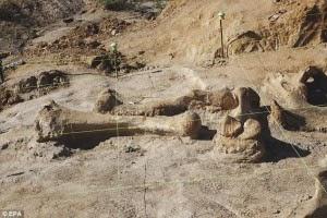 Fosil Mammoth Berumur 60.000 tahun Ditemukan di Texas