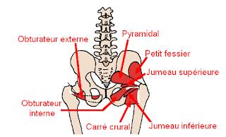 pelvi-trochantériens