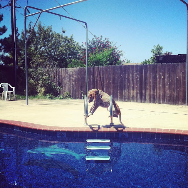 Maddie the Coonhound, a dog that loves to stand and sit on things., dog pictures, maddie pictures, maddie the coonhound pictures, amazing dogs