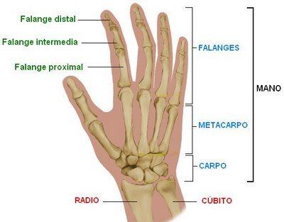 Dibujo de la mano del cuerpo humano y sus partes