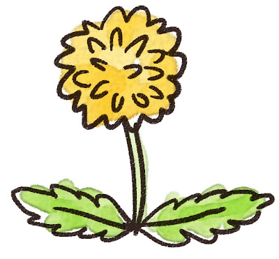 たんぽぽのイラスト(花)