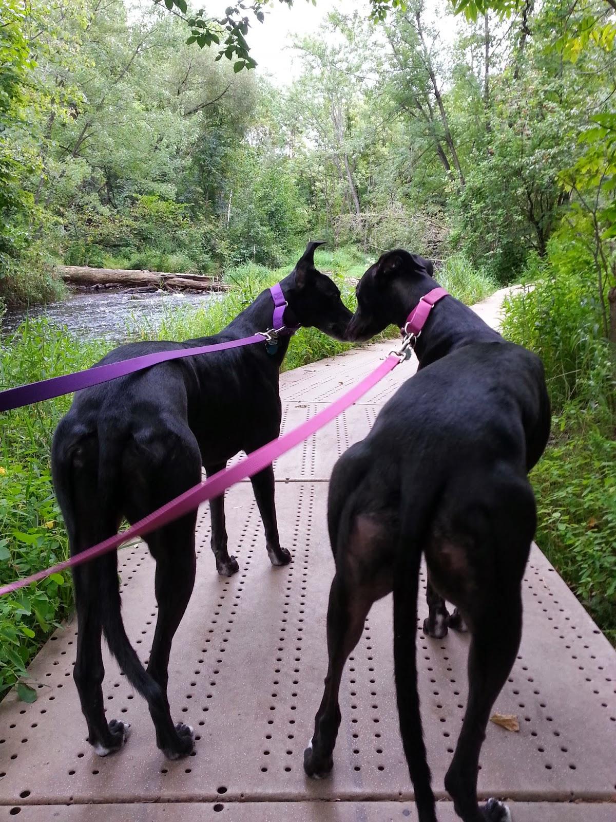 Dog Friday Black Adoption Greyhound Northern Blog:  Lights