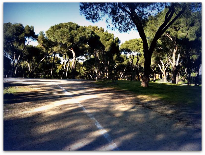 Imagen de la Dehesa de la Villa (Madrid), donde se corre el cross ciudad de los Poetas