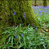 Forest Frolic: Bluebell Season