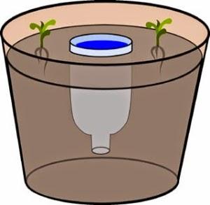 vaso-autoinnaffiante-fai-da-te-riciclare-una-bottiglia-di-plastica-diy-pot-bottle-selfwatering-2