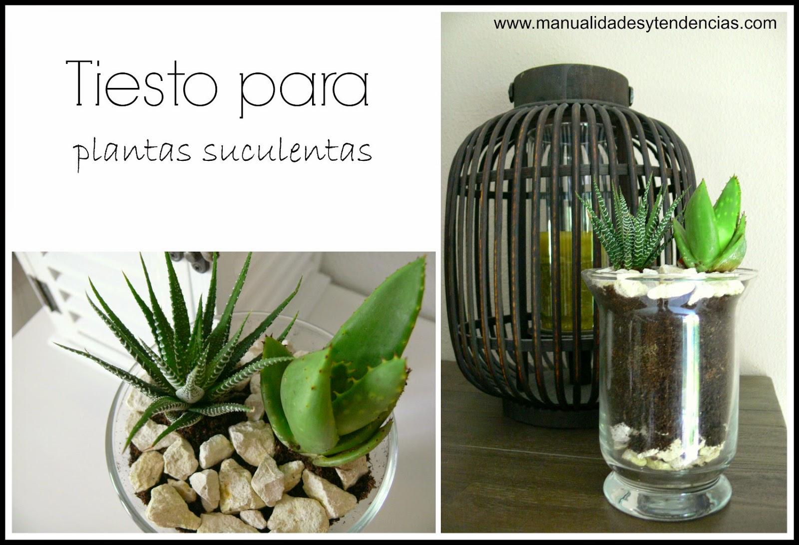 tiesto para plantas suculentas hecho con un jarrón