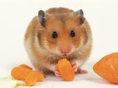#2 Hamster Wallpaper