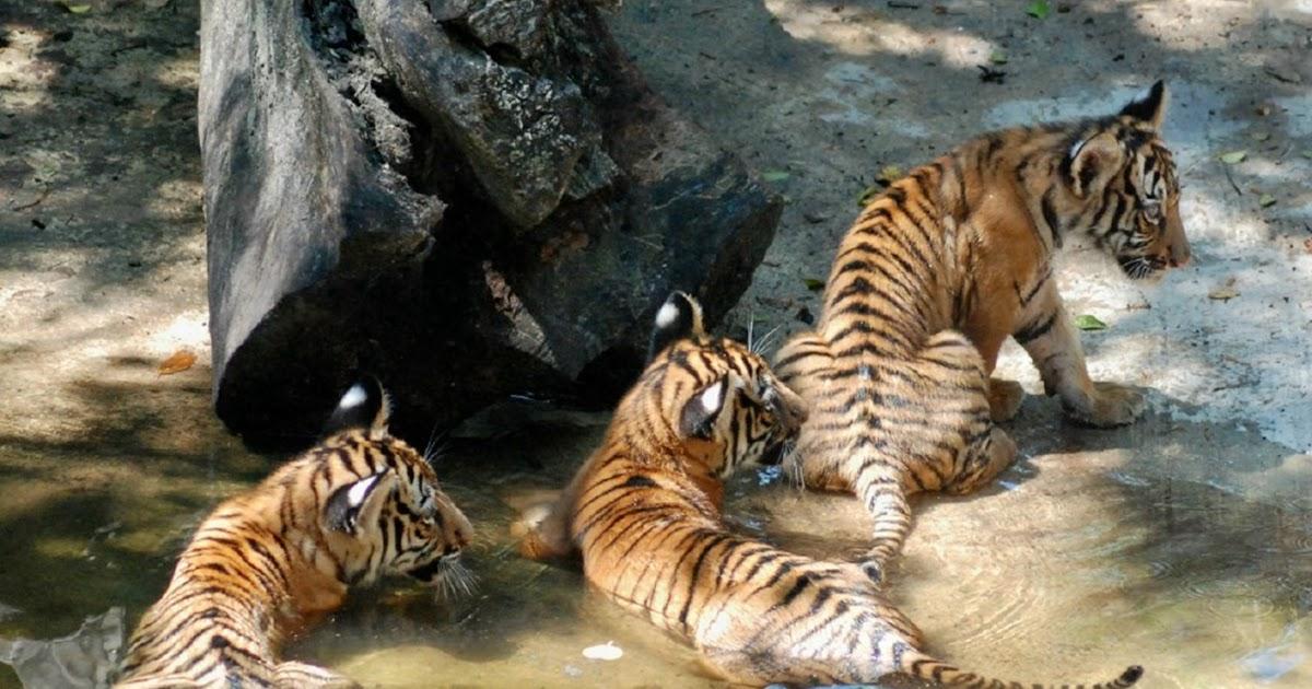 Palm Beach Zoo Gala