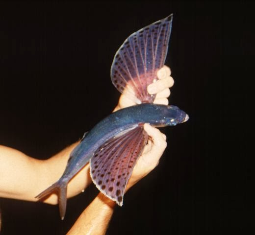 Amazing animals pictures a little journey out of sea the for Fish 2 flirt
