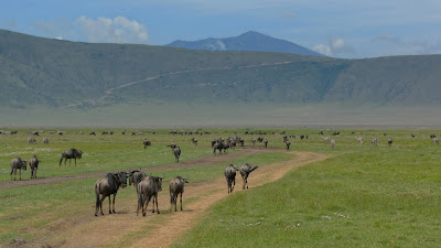 Ngorongoro Wild life Conservative Area Tanzania