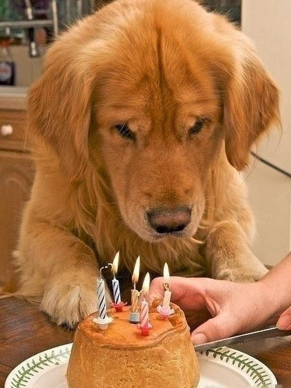http://cutepuppyanddog.blogspot.com