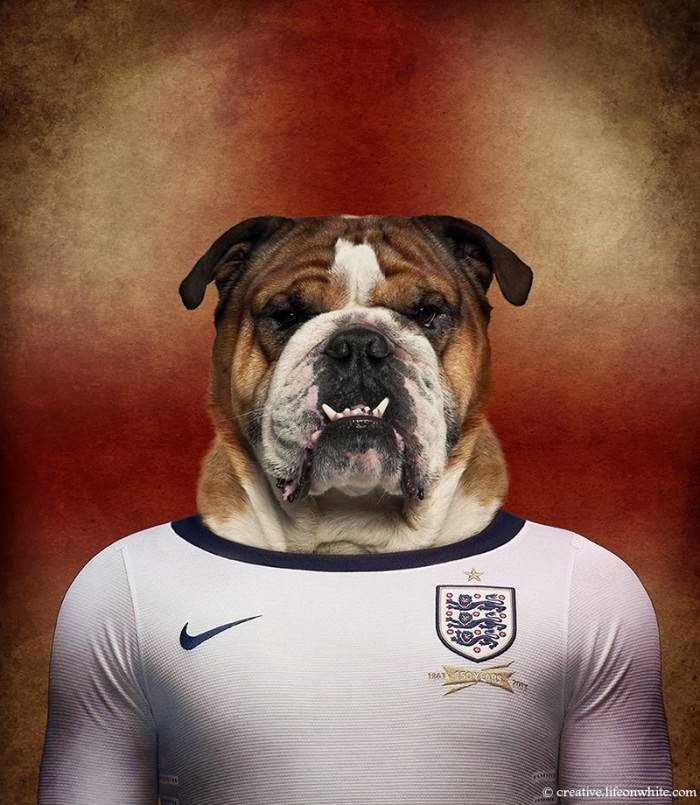 England – English Bulldog