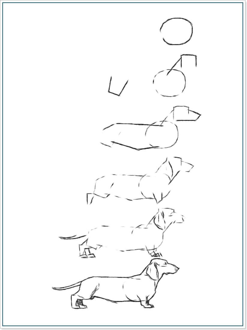 Как нарисовать пошагово таксу