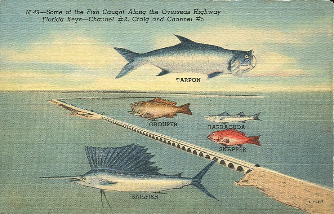 Vintage travel postcards florida keys for Key west florida fishing