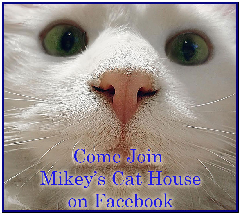 Mikey's Cat House