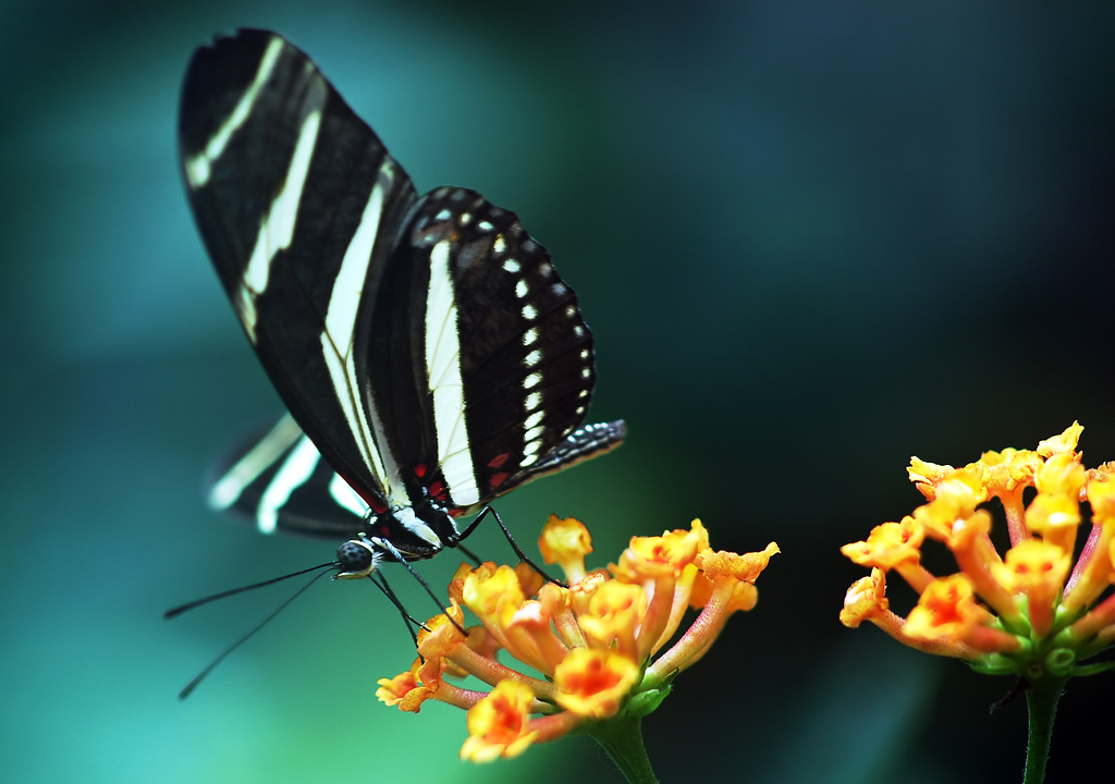 download butterfly wallpaper - photo #9