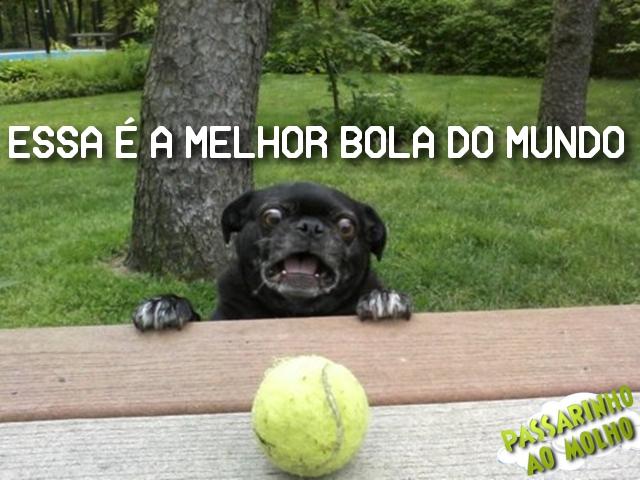melho bola do mundo, cachorro