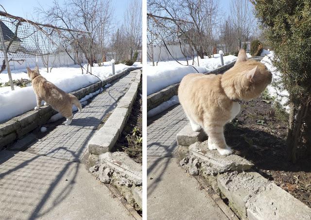 Весна -кот гуляет