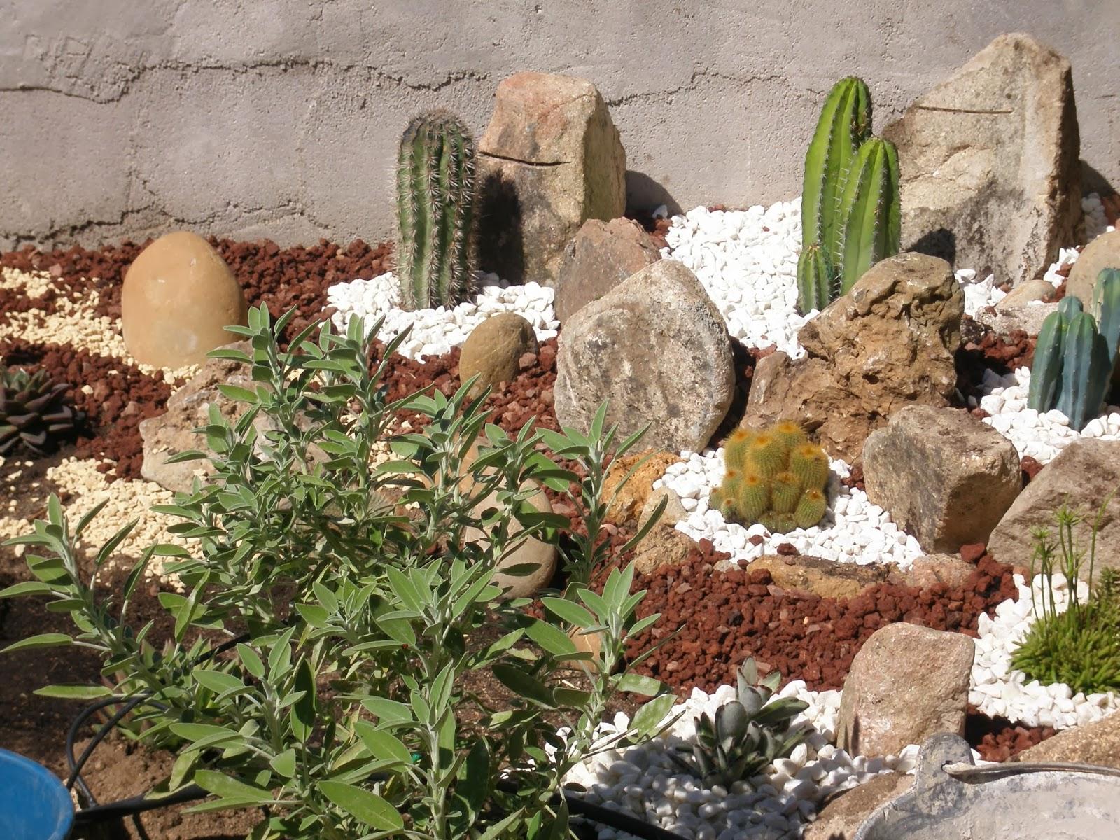 La br jula de los 8 calderos minijard n de cactus en la - Jardines con cactus y piedras ...