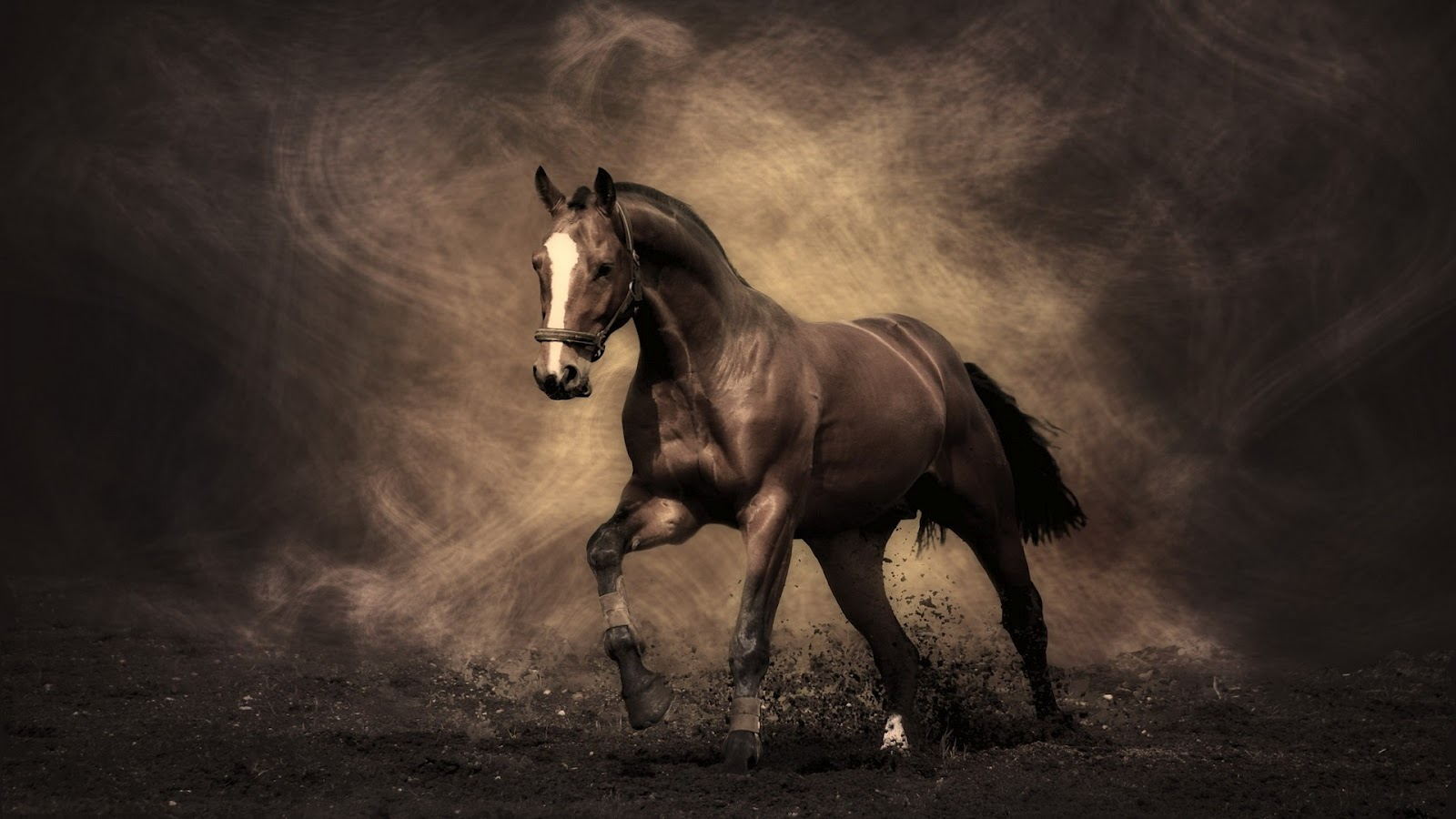Cool   Wallpaper Horse High Quality - Wonderfull+Painted+Horse  Photograph_312474.jpg
