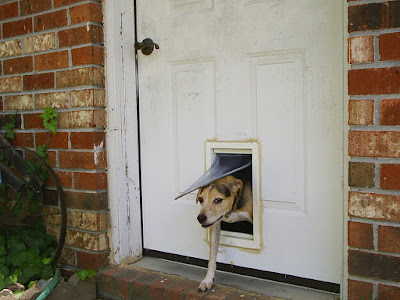 Portable Dog Door Inherent Facts About Electronic Pet Doors Pros