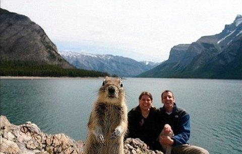 photobomb animal
