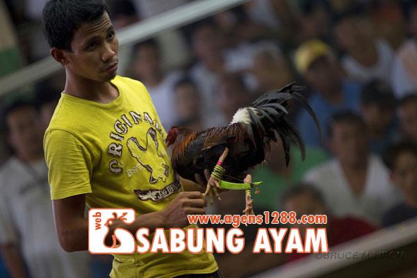 Hasil Pertandingan Arena AR2 Sabung Ayam S1228.net 20 November 2015