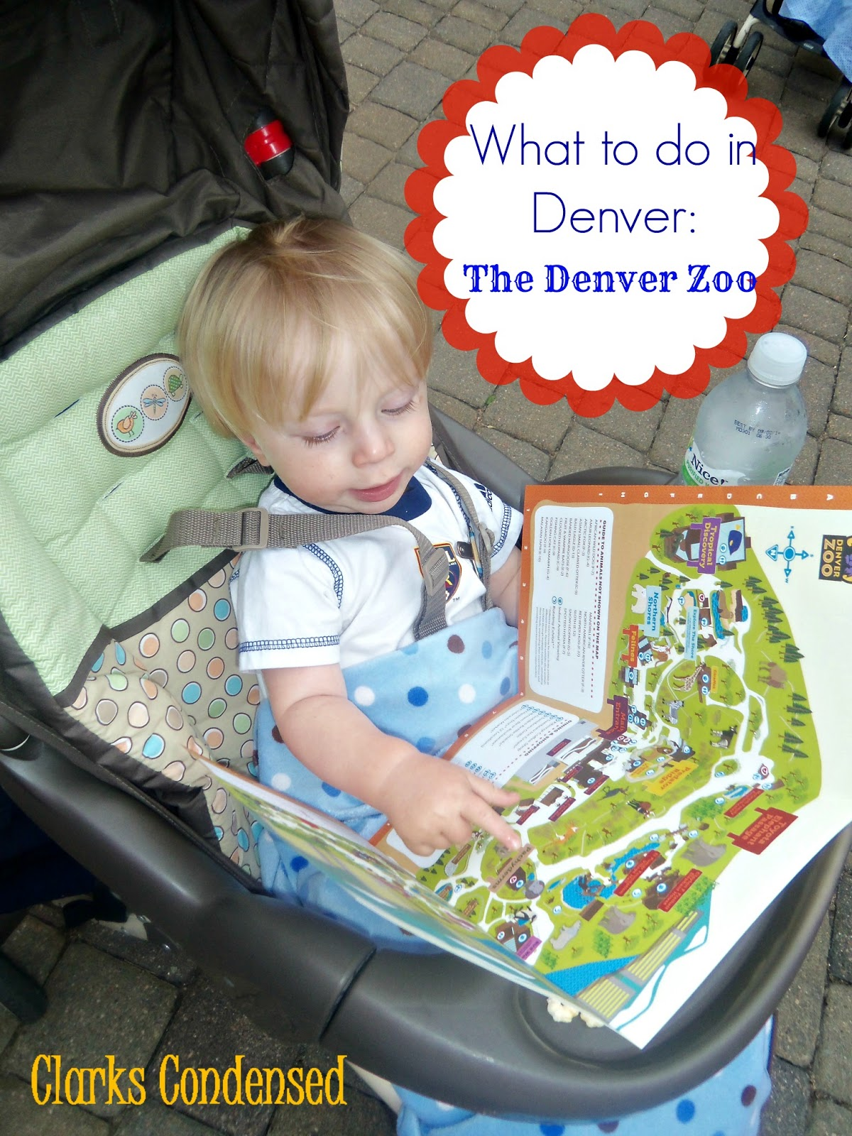 The Denver Zoo