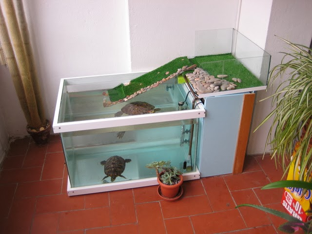Tortuga japonesa cuidados de la tortuga japonesa - Como construir un estanque para tortugas ...