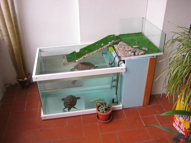 Tortuga japonesa cuidados de la tortuga japonesa for Acuario tortugas